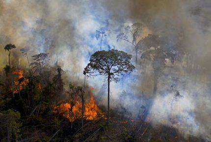 Incendios siguen castigando el Amazonas y el Pantanal de Brasil