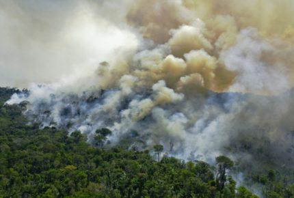 Selva amazónica pierde más de 8 mil kilómetros por deforestación