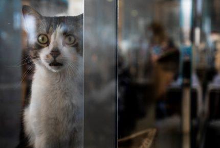 España investiga laboratorio por crueldad animal