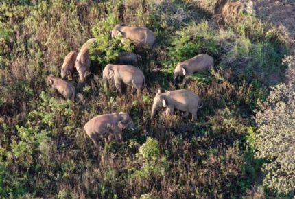 Inédita marcha de elefantes alerta sobre deterioro ambiental