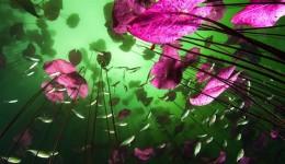 Water plants at Car Wash.