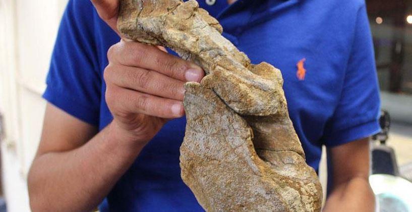 Descubren cementerio de dinosaurios en Coahuila