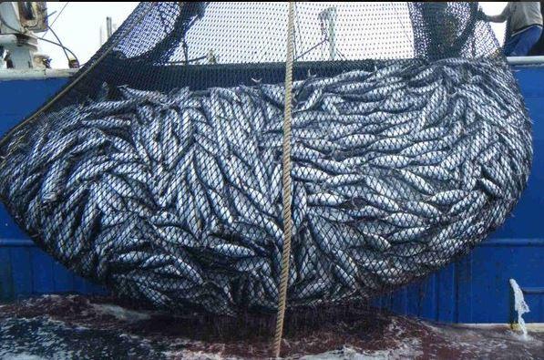 El atún mexicano gana 'pelea' a EU