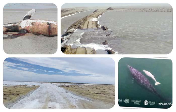 Indaga UNESCO a México por derrame al mar