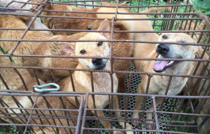Taiwán prohíbe comer perros y gatos