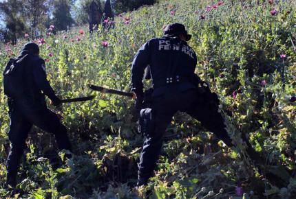 Heroína: Negocio millonario de muerte
