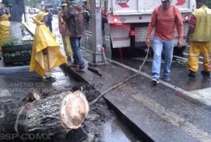 Aguacero deja 13 encharcamientos y 5 árboles caídos en la CDMX