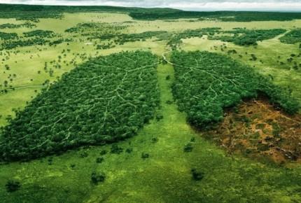 América Latina, la zona de mayor peligro para ecologistas