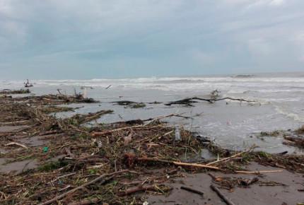 Plantaciones citrícolas, las más afectadas por 'Franklín' en Veracruz