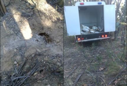 Hallan 6 cuerpos en fosa clandestina de Edomex