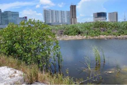 Profepa suspende en definitiva proyecto Tajamar en Cancún