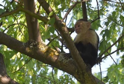Terreno accidentado complica captura de mono de las Lomas