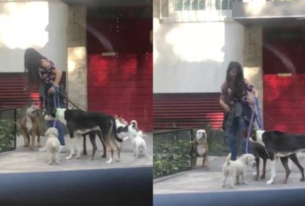 Exhiben a 'paseadora' golpeando a perrito en Polanco