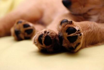Alerta en Tampico por envenenamiento de mascotas