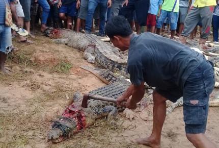 Por atacar a un hombre, multitud enfurece y masacra a 300 cocodrilos