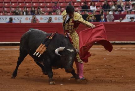PVEM presenta iniciativa para prohibir corridas de toros en la CDMX