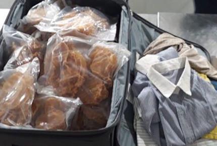 Aseguran 271 vejigas de totoaba en AICM; provenían de Panamá
