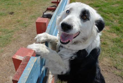 Tamaulipas prohíbe cortar cola y orejas a mascotas