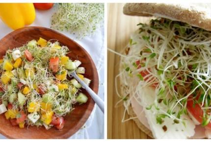 Razones para comer germinados