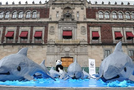 Semarnat informará a AMLO sobre crisis de vaquita marina