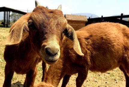 Santuario El Camino, una segunda oportunidad para animales rescatados