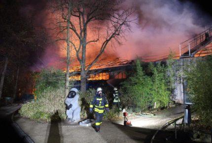Tres mujeres serían responsables de incendio en zoológico alemán