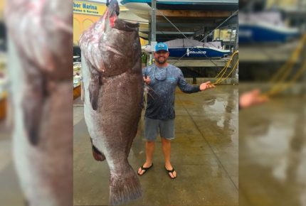 Capturan a pez de casi 160 kilos en Golfo de México