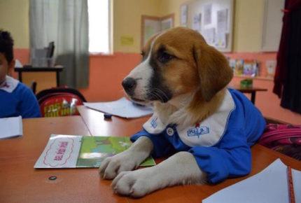 Fidnik, un perrito que es el mejor estudiante de su clase