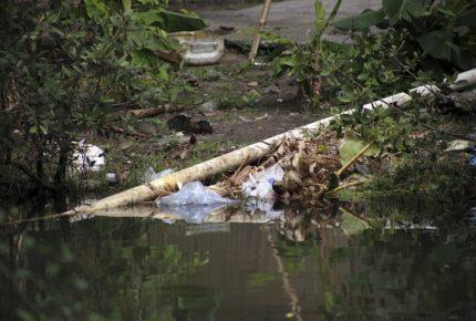 Colima es el peor calificado en el índice de Impunidad Ambiental