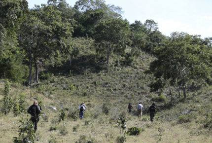 Se escapa león de rancho en Edomex y mata a un hombre