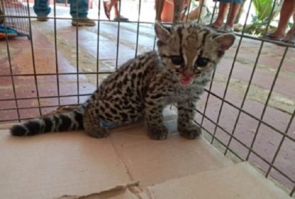 Rescata Profepa ejemplares de fauna silvestre en Huatulco