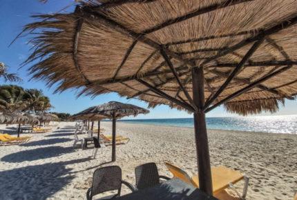 Cocodrilos 'vacacionan' en playas de Oaxaca