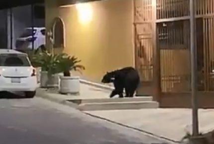Fauna silvestre se pasea por calles de Monterrey