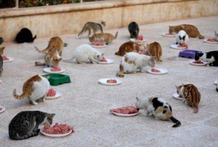 Rescatan a 238 gatos de un casa en Japón