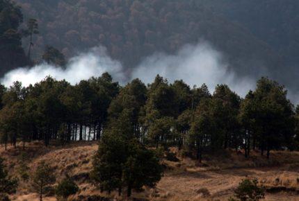 México en el top 5 de países con mayor deforestación