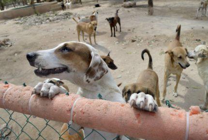 Pareja vietnamita es detenida por envenenar perros y gatos