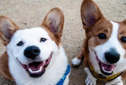 Por videollamadas, refugio ofrece perritos en adopción