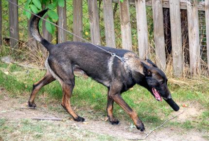 Muere primer perro diagnosticado con Covid-19 en EU