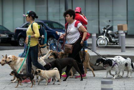 Felicita a tu lomito, hoy se celebra el Día Mundial del Perro