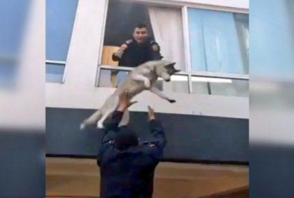 ¡Lomito rescatado! Policías salvan de incendio a perrito