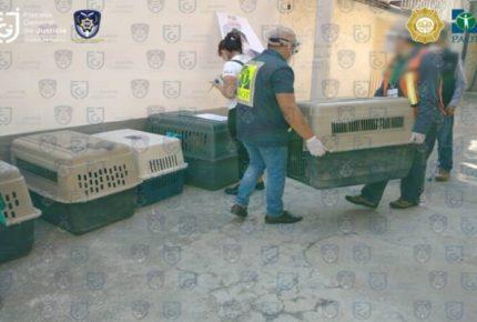 Policías rescatan a 18 perritos en Iztacalco