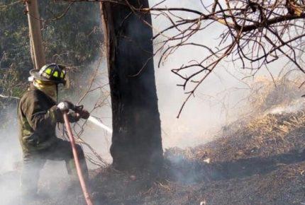 Incendios han acabado al menos 4 mil hectáreas en CDMX