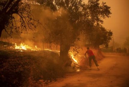 Incendios al norte de Argelia suman 65 muertos