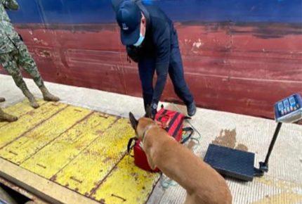 Decomisan 37 kilos de cocaína en Aduana de Lázaro Cárdenas