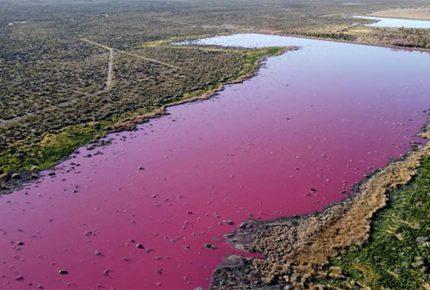 Laguna se tiñe de rosa en Argentina por derrame de químicos