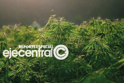 SCJN avala despenalización del uso lúdico de mariguana