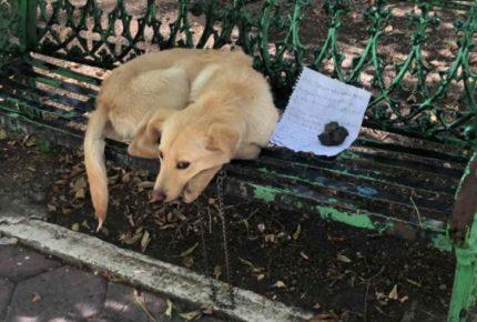 Se hace viral abandono de perrito en parque de Coyoacán