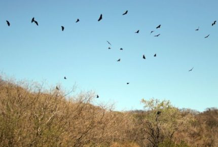 Sequía afecta más del 80% del territorio mexicano