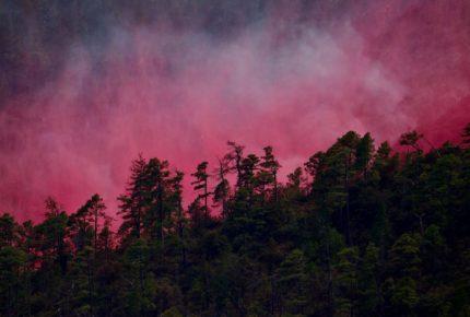 Hay 54 incendios forestales activos en 18 estados