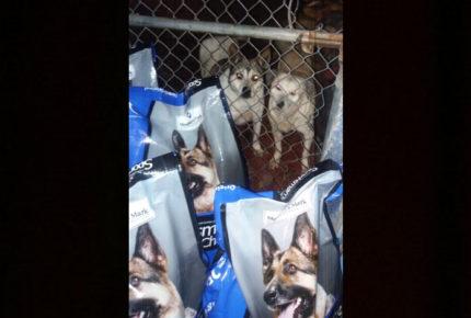 Asaltan refugio y dejan sin comida a un centenar de perritos